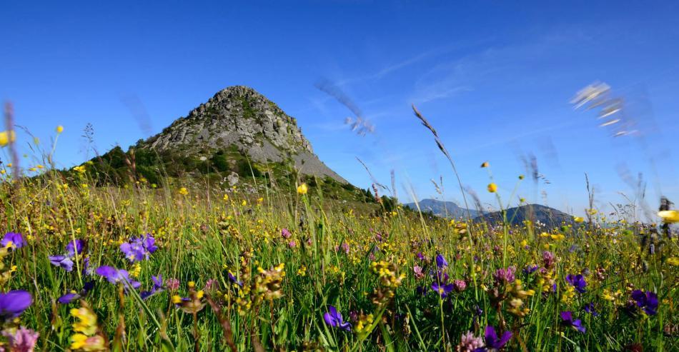 The Mont Gerbier de Jonc