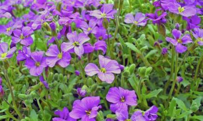 Photo: PABvision.com.