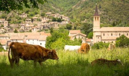 ©S.BUGNON - Jaujac - Vaches à Rochemure-2 ©S.BUGNON