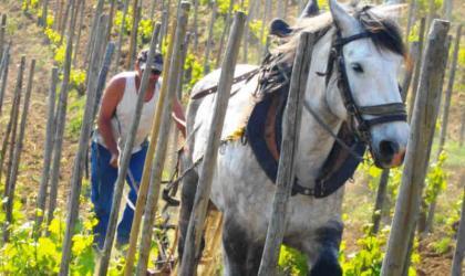 - De ferme en ferme_Domaine de Gouye_St Jean de Muzols
