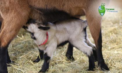 ©chevreriedelafontauliere - Montpezat sous Bauzon - Chèvrerie de la Fontaulière ©chevreriedelafontauliere