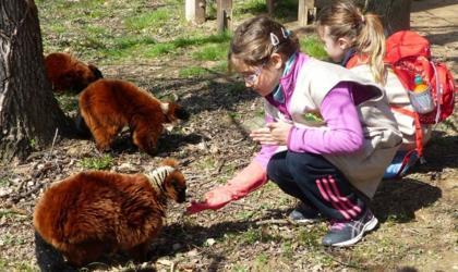 Safari de Peaugres - Primates au Safari de Peaugres