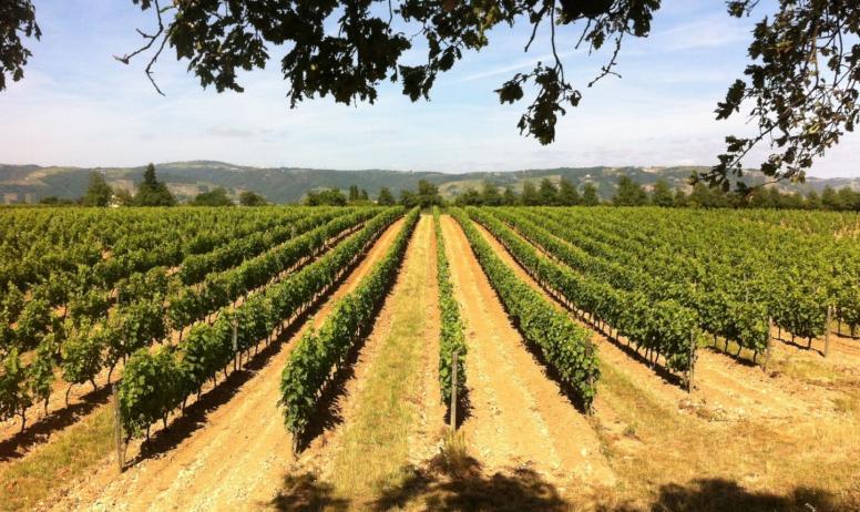 Domaine La Ville Rouge - Les vignes