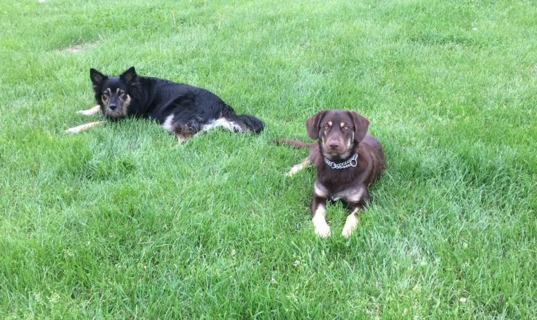 Nos chiennes Mia & Muscade