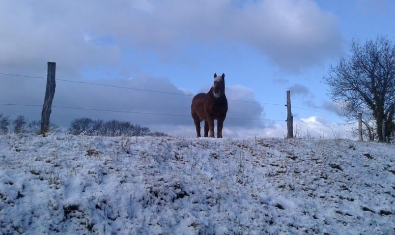 le fameux regard fidèle du cheval !