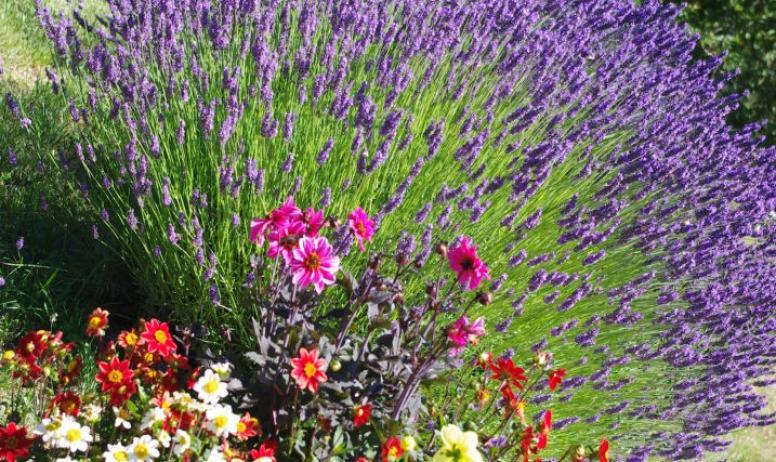 La Haute Maurelle - Jardin