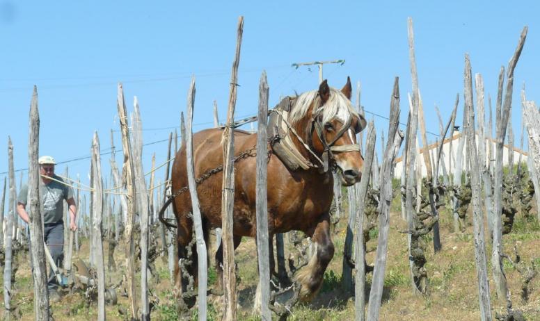 rouchier - Le cheval