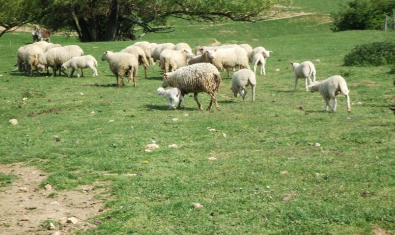 @ferme de simondon - es animaux ânes et brebis Ferme de Simondon