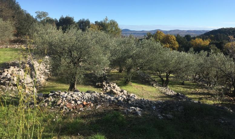 Thomas Fabre - Randonnée olive