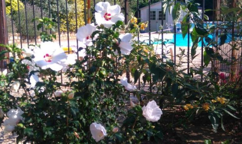 Clévacances - Le charme des fleurs et de la piscine