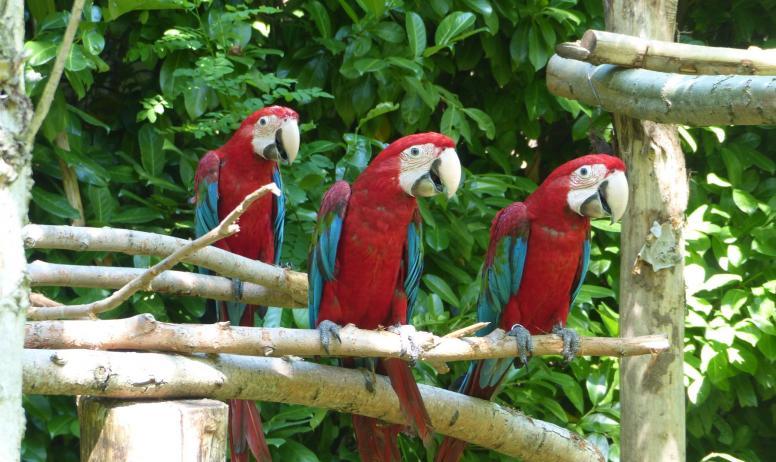 Ardèche Hermitage Tourisme - Parc des perroquets