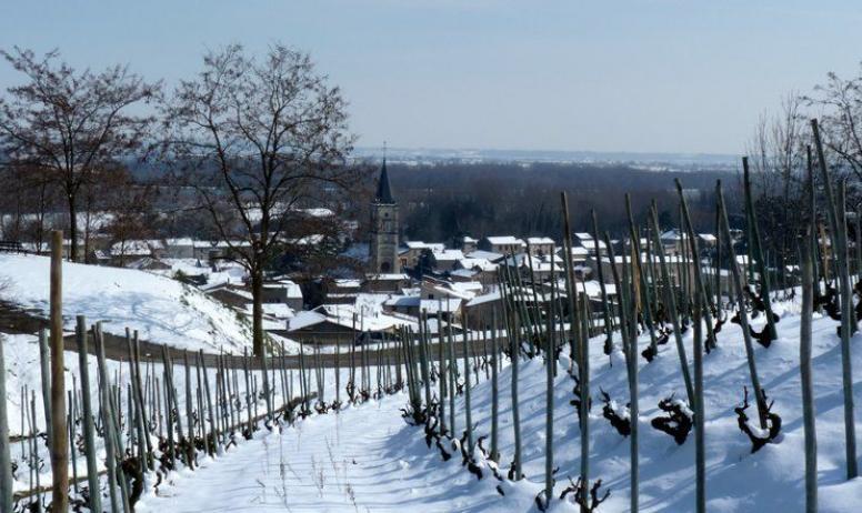 Domaine Coursodon - Mauves sous la neige - Domaine Coursodon